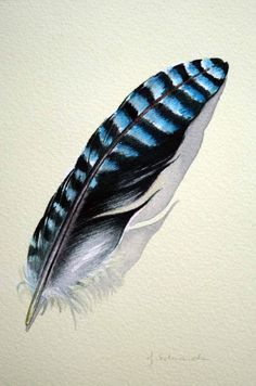 Feather 108 - European Blue Jay Feather from Australia - Original Wat…