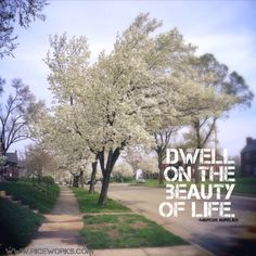 Dwell on the beauty of life! Love, riceworks.