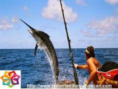 MICHOACÁN te dice ¿sabes que en Lázaro Cárdenas se lleva a cabo el evento internacional de pesca deportiva? el 8 de diciembre se efectuara este evento de pesca de el pez vela, esta es la especie que se a elegido por su abundancia, la salida de los participantes será del río balsas por la seguridad del oleaje al salir a mar abierto. HOTEL DELFIN PLAYA AZUL http://www.hoteldelfinplayaazul.com/portal/
