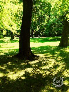 My Photos, Trunks, Plants, Drift Wood, Tree Trunks, Plant, Planets
