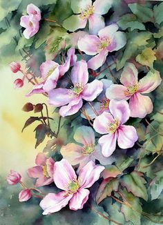 Clematis Montana by Ann Mortimer Arte Floral, Silk Painting, Painting & Drawing, Watercolor Flowers, Watercolor Art, Watercolour Paintings, Botanical Art, Beautiful Paintings, Oeuvre D'art