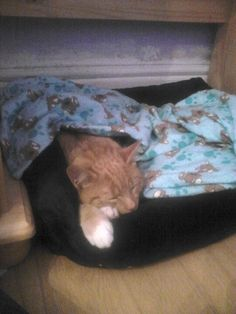 Momo all snug with his hot water bottle <3