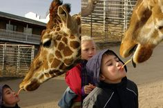 Top 10 things our family learned at the Hedrick Exotic Animal Farm Bed and Breakfast
