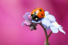 red pink blue by Mark Bridger