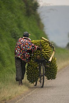 Ugandan man carrying Matooke on a bicycle.