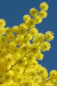 Point de départ des parfumeurs les champs de fleurs nous offrent une délicate harmonie.
