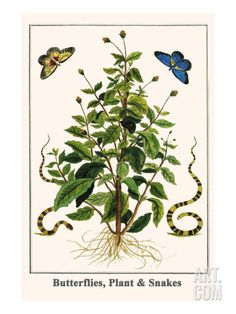 Butterflies, Plant and Snakes Reproduction artistiques