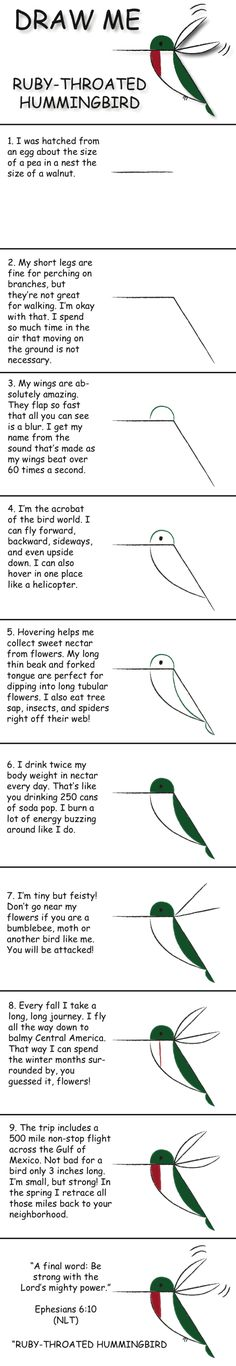 Draw a ruby-throated hummingbird in 10 easy steps and learn fun facts about its life.  © 2013 Marty Nystrom