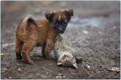 Щенок и котенок  #утро #доброеутро #день #животные #Россия #Серпухов #Тула #Самара #Москва #СПБ #Хабаровск #Ростов #Подольск #Чехов #Дмитров #кошки #собаки #щенки #кошка #собака #щенок #добро #дела #эмоции #animals #animal #cute #morning #dog #doggy #dogs #pet #pets #cat #cats #lovecat #awesome #hello