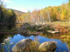 Beaver Dams on the Pemi river - Lincoln NH