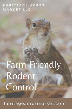 Whether you are a backyard gardener in the city or a homesteader in the mountains, we all have a common enemy- mice and rats. All that we enjoy and the fruits of our labor are readily snatched away by these tiny monsters. Fortunately there are several remedies available.  #farm #hobbyfar, #backyardfarm #backyard #rodents #pests Raising Farm Animals, Raising Chickens, Backyard Farming, Chickens Backyard, Farm Lifestyle, Homestead Farm, Modern Homesteading, Sustainable Farming, Living Off The Land