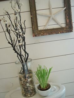 Framed starfish - inspiration for shadow box with sand dollars, shells, stones...