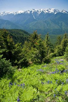 Hurricane Ridge trail in Olympic National Park, WA