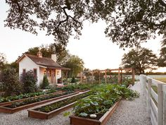 Chip and Joanna Gaines' Farmhouse Garden Photos - Fixer Upper Gaines' Family Garden Project garden landscaping plan Chip and Joanna Gaines Are Making a Major Change to Their Texas Farmhouse Joanna Gaines Farmhouse, Texas Farmhouse, Farmhouse Garden, Farmhouse Style, Modern Farmhouse, Garden Fencing, Garden Landscaping, Fenced Garden, Farmhouse Landscaping