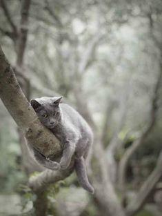 Grey cat branch hugging