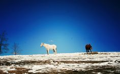 I love the contrast of the snow-covered ground against the bright blue sky. And the horses? *sigh* Courtesy of House of Emery. Fall Photos, My Photos, Shades, Sky, Horses, Contrast, Blue, Bright, Animals