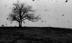 vanillepenis:  Stellst dich in den Sturm und schreist: Ich bin hier! Ich bin frei! Alles was ich will ist Zeit.