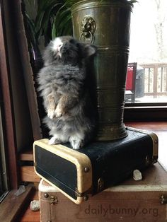 Bunny stands up sooo tall! - December 17, 2014