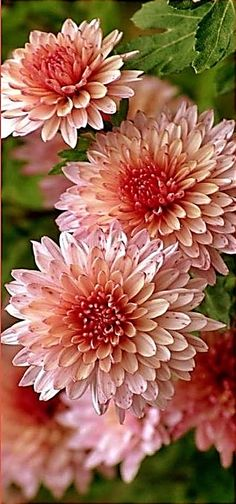 Terrific Wedding Bouquet Ideas That Will Save You Money And Not Compromise Your Wedding Style Exotic Flowers, Fall Flowers, Amazing Flowers, My Flower, Beautiful Flowers, Wedding Flowers, Flowers Dp, Flower Names, Flower Spray