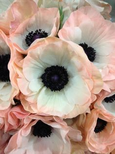 COLOR INSPO::::pale pink and ink blue.: certain mythology connects the anemone to magical fairies, who were believed to sleep under the petals after they closed at sunset. My Flower, Beautiful Flowers, Beautiful Gorgeous, Anemone Flower, Cactus Flower, White Anemone, Anemone Bouquet, Flower Colour, Ranunculus Flowers