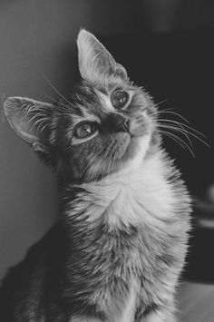 kitty cat love photography animals adorable Black and White eyes hipster vintage boho indie b&w cats Grunge animal amor retro pale black and grey Animals And Pets, Baby Animals, Funny Animals, Cute Animals, Funny Cats, Cats Humor, Funny Horses, Animals Images, Animal Pictures