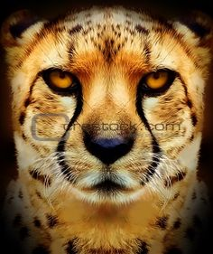 cheetah face paint - Google Search