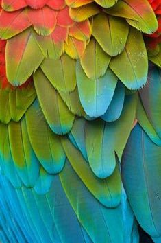 Colorful Macaw Plumage Vinyl Wall Mural - Themes - Home Decorations Ideas Colour Pallette, Color Palate, Colour Schemes, Color Combos, Color Patterns, Turquoise Color Palettes, Fiestaware Color Combinations, Chartreuse Color, Yellow Turquoise