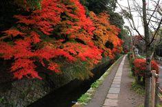 Philosopher's Lane,Kyoto 哲学の道 紅葉