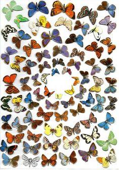 Butterflies2/Ben Giles