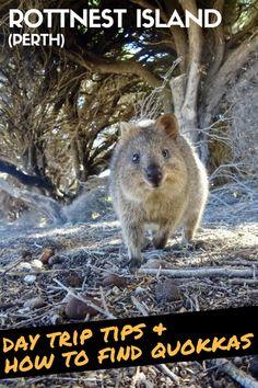 How To Visit Rottnest Island: Day Trip Itinerary For Nature Lovers #Australia #WA #WesternAustralia #Perth #RoadTrip