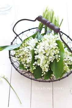 Lily of the Valley...mine are all but gone...sad face....I look forward to their coming again next spring!