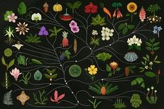 Nike trainers sprout plants and French perfumiers inspire by mysterious scientific icons in Katie Scott's visions that take botanical illustration into the digital age
