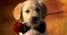 A little puppy can bring a ring to her in the early morning - 15 Golden Ideas Of How To Propose Marriage To Your Girlfriend #Proposal #marriage