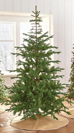 7.5' Norwegian Spruce Martha Stewart $249  9318500610 . http://www.homedepot.com/p/Martha-Stewart-Living-7-5-ft-Indoor-Norwegian-Spruce-Hinged-Artificial-Christmas-Tree-9318500610/206497556