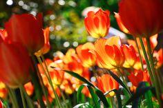 Spring Shines / April 2015 https://www.facebook.com/goodallphoto