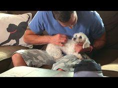 Lucky Dog - Lap Dog - YouTube