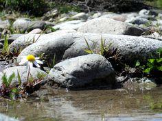 Margarita asomada en el río.  El Bolsón