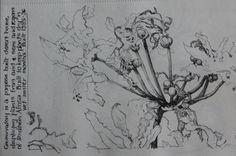 Plant Kirstenbosch conservatory.