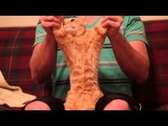 Dubstep Cat- I am CRYING! It starts off funny.then it gets hilarious!