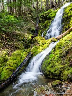 Get outside and come see this place! One of dozens of creeks and waterfalls along Mt. Rose Trail #814 heading into the south end of Olympic National Park near the Puget Sound of Washington. #wildsideWA #explorehoodcanal