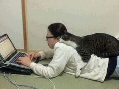 Are you having a difficult time balancing your cat with your work schedule? Here are some tips to keep the home office work environment in balance so you can get everything done and still feel like a good cat parent.
