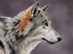 Have you always wanted to learn to draw animals? This Gray Wolf was done using Pastel Pencils and you can learn to draw it too in just 4 Easy Art Lessons with Tap the pin to get LifeTime Access. Pastel Pencils, Coloured Pencils, Pastel Portraits, Dog Portraits, Outline Drawings, Animal Drawings, Colin Bradley, Easy Art Lessons, Wolf Colors