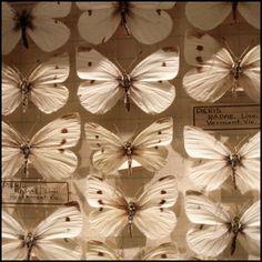 Melbourne Museum, Australia 2010 © Incognita Nom de Plume