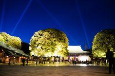 Sanctuaire Meiji, Japon | Le Sanctuaire Meiji est un immanquable de Tokyo, il marque un tournant ...