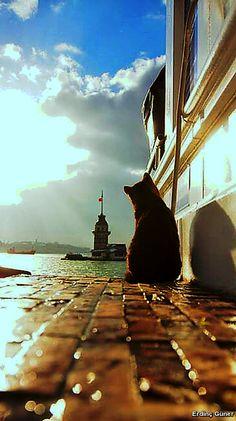 Erdinç Güner - Google+ İstanbul'u seyrediyorum gözlerim kapalı.