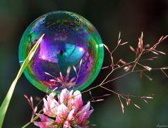 Гигантские мыльные пузыри!!! - Babyblog.ru