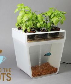 Aquaponics is up for funding on Kickstarter until December 15. If successfully funded, the tanks will reach consumers in February 2013. If you'd like to donate and be one of the first people to receive a tank, click here.