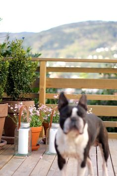 love the horizontal deck railing