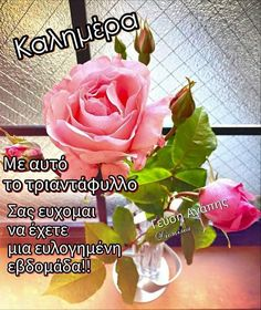 Greek Quotes, Plants, Plant, Planets