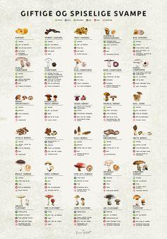 GIFTIGE OG SPISELIGE SVAMPE Er du svampe entusiast? eller kender du en der er svampe entusiast? Her får du en plakat der viser nogle af de mest kendte svampe vi har i Danmark. Plakaten sætter spiselige op mod giftige, og viser hvilke svampe de kan forveksles med. Plakaten er kanon som gave, både til dig selv og Teaching Schools, Food Crush, Food Charts, I Want To Eat, Cool Posters, Things To Know, Tapas, Food And Drink, Healthy Recipes